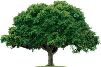 Erdősítés a Föld megmentője?